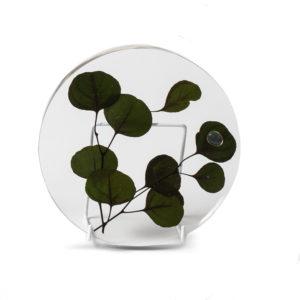 Eucalyptus Plant Plate