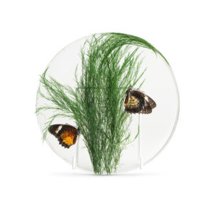 Insect Plant Plate