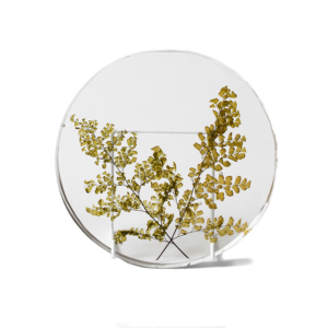 Fern Plant Plate